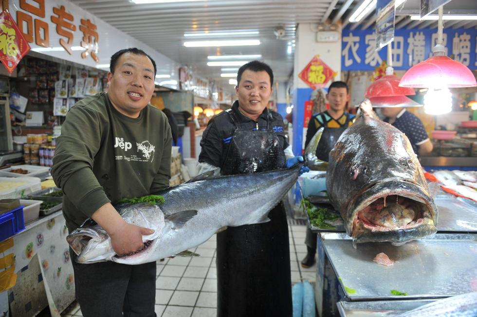 山东青岛305斤巨型石斑鱼称霸海鲜市场