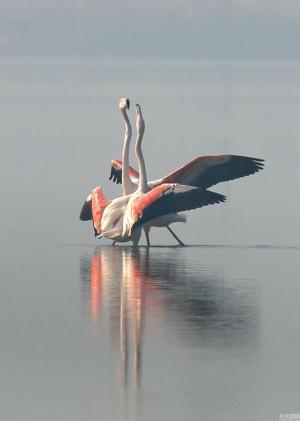 被列为世界濒危野生动物红色名录