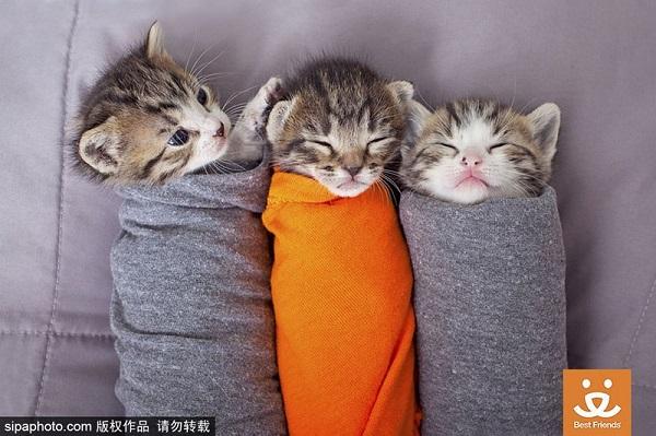 美动物救助中心 可爱小猫排排睡萌化人
