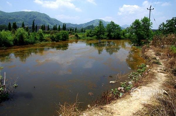 7月28日上午,有网友在微博上发图片称龙港红河之后,水头又现黄河,河水似如生锈。地址位于浙江省温州市平阳县水头镇周山村,从该网友发的图片上看到,一条河道上全部变成铁生锈的颜色。    7月28日,浙江省温州市平阳县水头镇周山村现黄河,水质呈铁锈色。    在该条河边上记者看到,与黄色漂浮物在一起的,还有很多的生活垃圾,有的已经腐烂。表明这条河平时没有人进行清理。   7月28日,浙江省温州市平阳县水头镇周山村现黄河,水质呈铁锈色。    据平阳县环境监察大队副大队长叶东称,经过现场PH